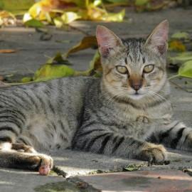Katze am Bauernhof in Flachau