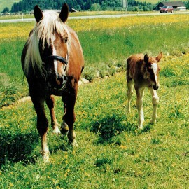 Urlaub am Bauernhof in Flachau